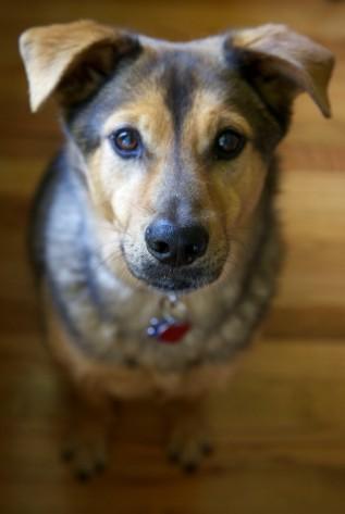 puppyportraits